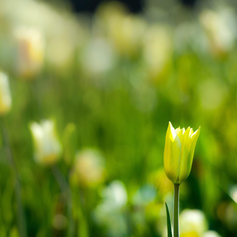 Grönskan - När kommer våren på riktigt?