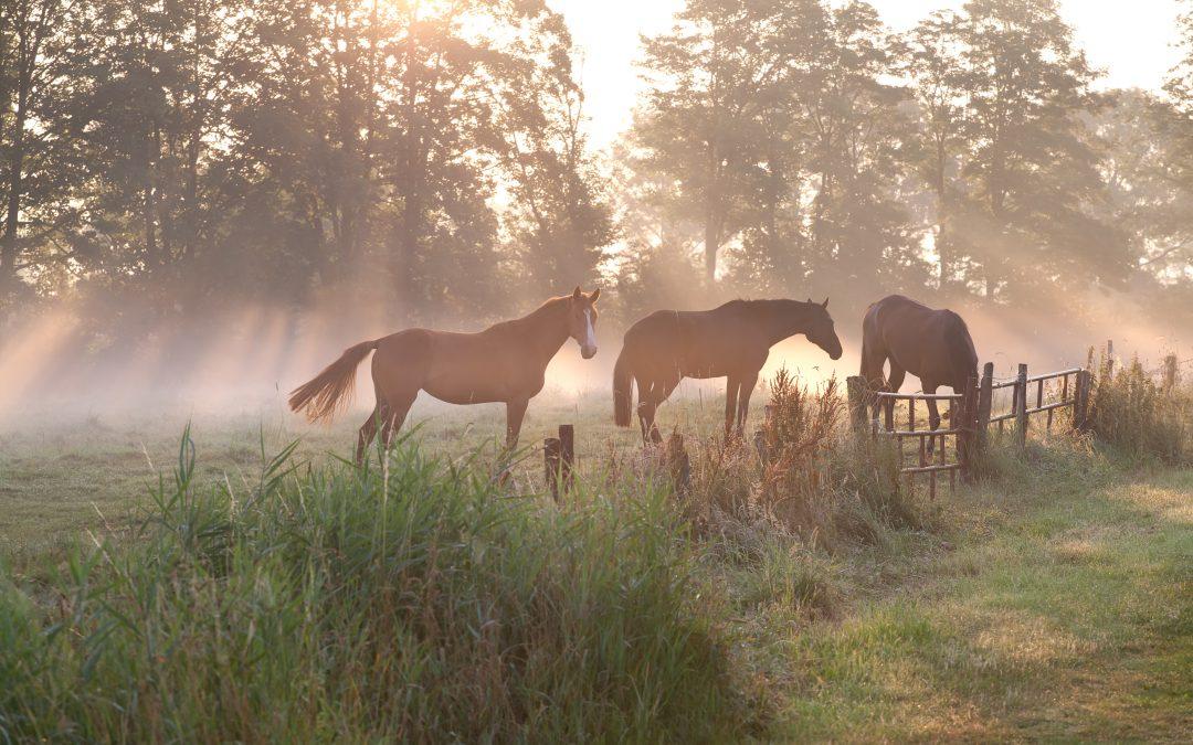 Spela på hästar med Andelsspel?